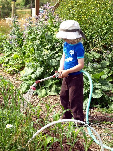 Boy watering garden corn
