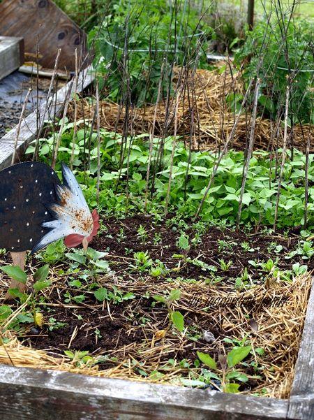 Garden box raised vegetable