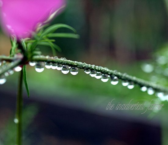 Raindrops water drop line flower macro bokeh