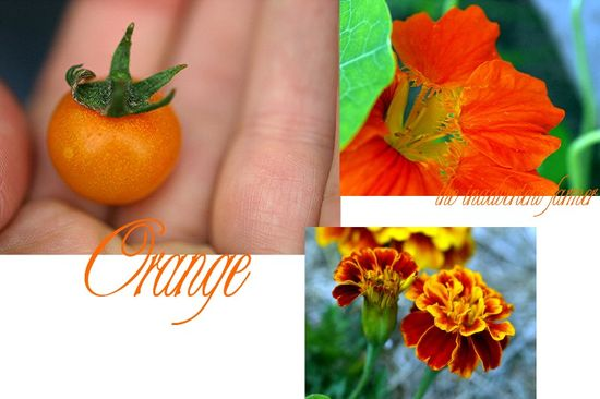Orange garden collage