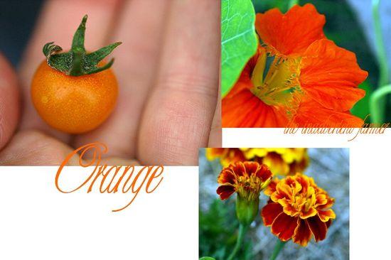 Orange garden collage