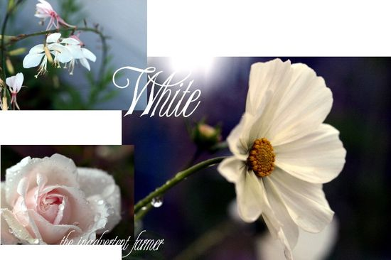 White garden collage