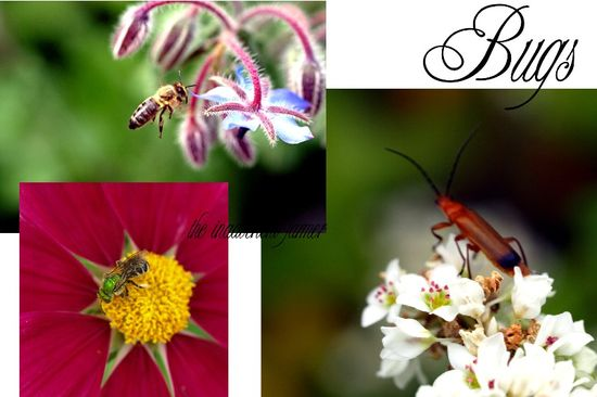 Insect garden collage