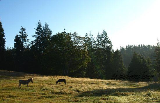 Donkeys dawn pasture farm