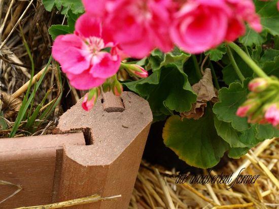 Garden box corner raised bed