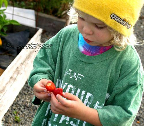 Boy strawberries garden yellow hat