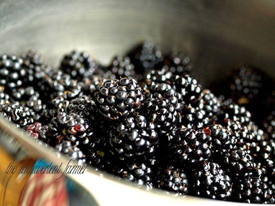 Blackberry compote