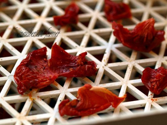 Tomatoes dried dehydrated spiced