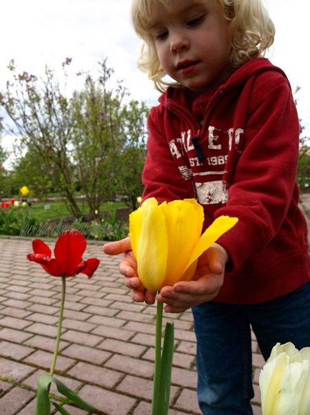 Garden tour boy tulip