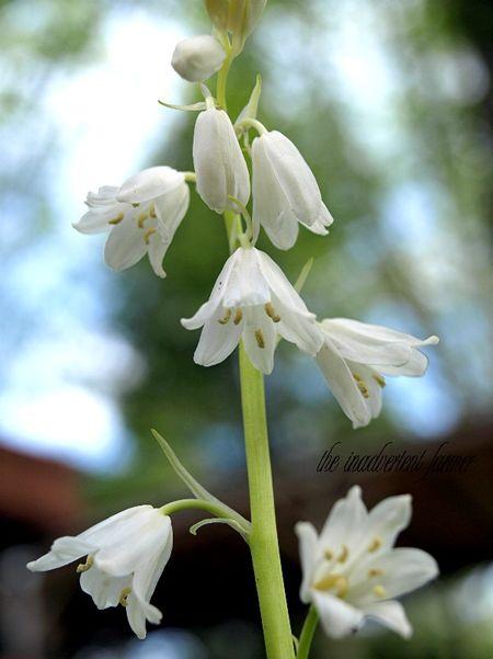 Flower white spring