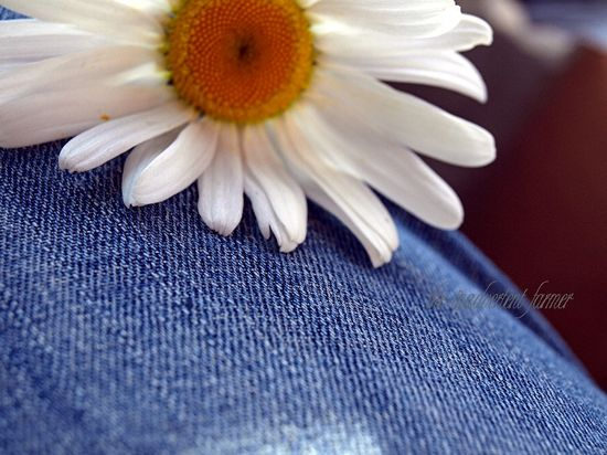Daisy bokeh blue jeans shallow denim