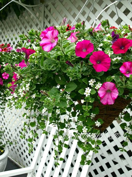 A basket flowers hanging petunias
