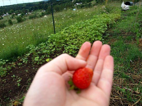 Hand strawberry girl