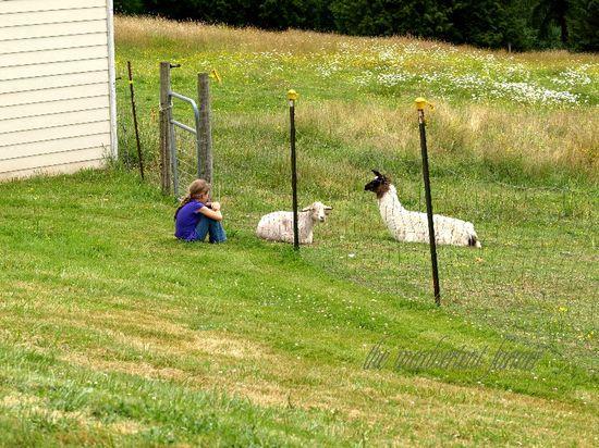 Country girl llama goat pasture farm