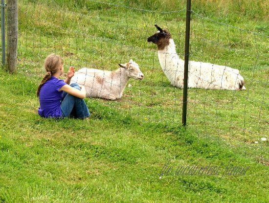 Country girl goat llama conversation