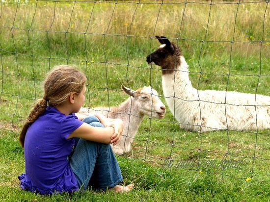 Country girl sit grass goat llama