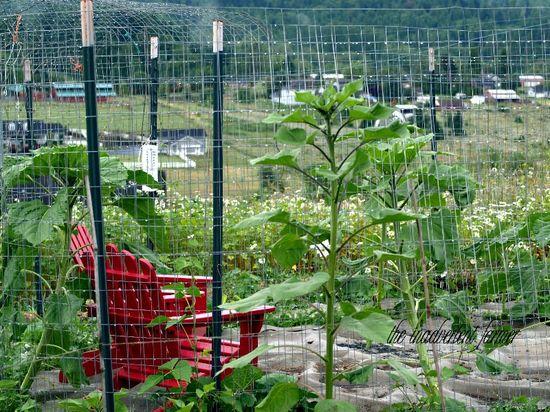 Maze garden children chairs