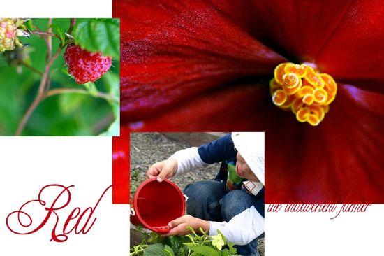 Red garden collage