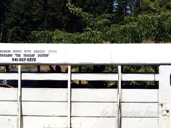 Donkeys trailer