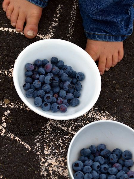 Blueberries picked bowls