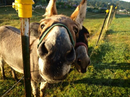 Donkey up close funny face