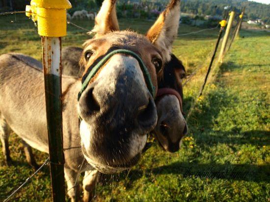 Donkey up close funny face