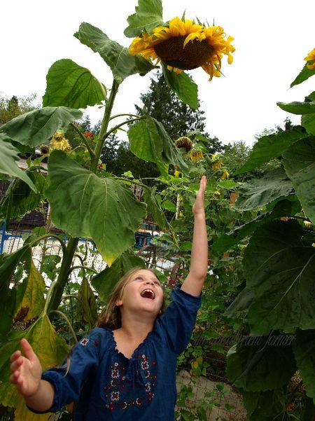 Sunflower joy child garden